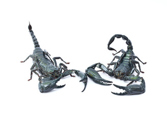 Two scorpions.