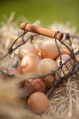 Basket of fresh eggs on the farm