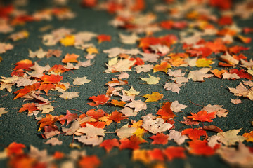 Wall Mural - Red and yellow Autumn leaves on asphalt background