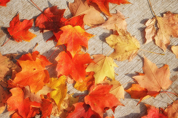 Wall Mural - Autumn leaves fall on ground background