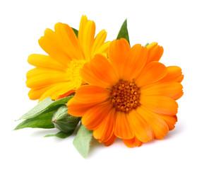 Beauty marigold flowers