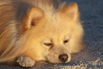 Peacefully sleeping