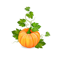 Orange pumpkin vegetable with green leaves isolated on white