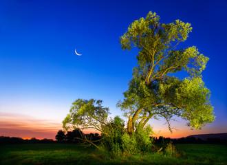 Wall Mural - Beleuchteter Baum vor tiefblauem Nachthimmel