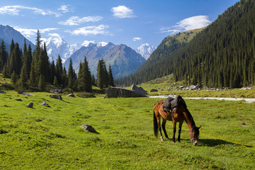 Fototapete - Mountain landscape with grazing horse