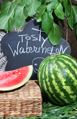 Ripe watermelon on grass near fence
