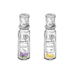 hand drawn apotechary flasks with mandrake root and lavender dri
