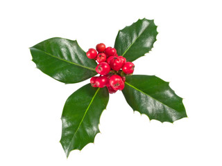 Holly Berry isolated on a white background.
