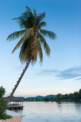 picturesque palm tree leans over the tropical river