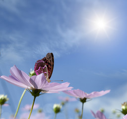 butterfly on a daisy.