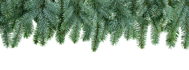 christmas tree branches isolated on white