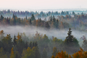 Poster Morning with fog Autumn forest