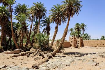Morocco, Draa valley. Doum Laalag oasis