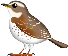 小鳥(つぐみ)