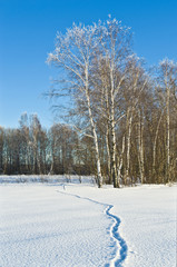Wall Mural - Fox trace in loose snow