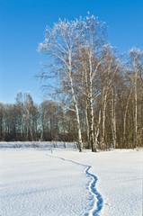 Fototapete - Fox trace in loose snow