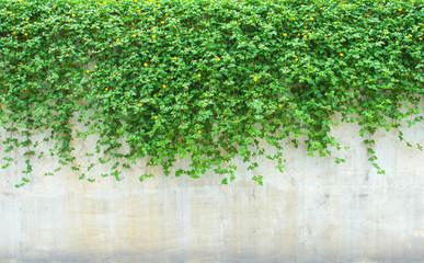 Obraz ornamental plants on wall - fototapety do salonu
