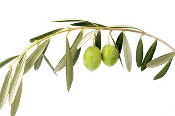 Fototapete - Ramo di ulivo curvato e due olive verdi