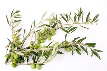 Fototapete - Rami di ulivo e olive