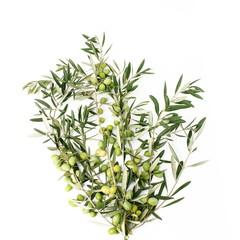 Fototapete - Rami di ulivo a forma di albero