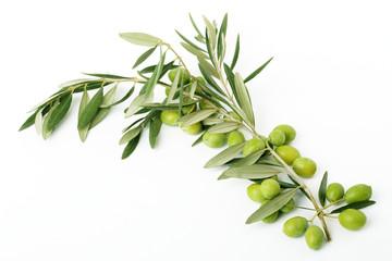 Photo sur Plexiglas Oliviers Ramo di ulivo con foglie e olive#5