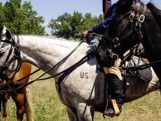 US Cavalry Horse