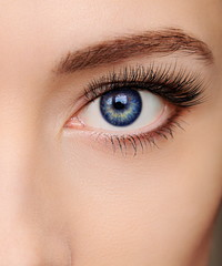 Closeup beautiful blue woman eye with long salon lashes looking