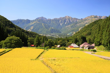Japan Alps and rice field, Hakuba village Aoni