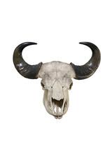 Bull big horns isolated on white background