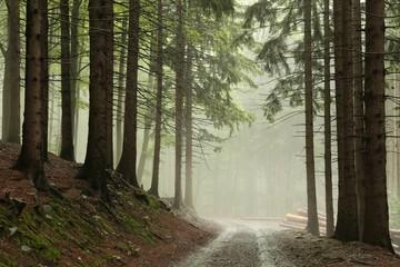 Keuken foto achterwand Bos in mist Coniferous forest in fog