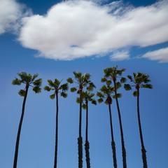 California palm trees on blue sky