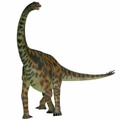 Spinophorosaurus on White