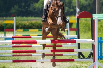 Horse jump a hurdle