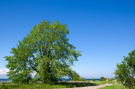 Big, wide tree