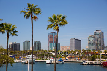 Wall Mural - Long Beach California skyline from palm trees of port