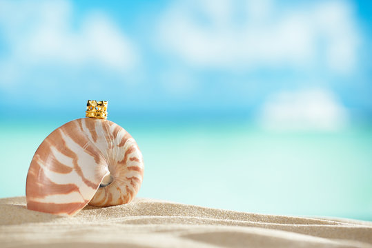 nautilus shell and crown  with ocean , beach and seascape, shall