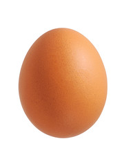 Chicken egg isolated