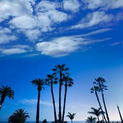 California high palm trees silohuette on blue sky