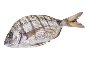 Raw Tilapia