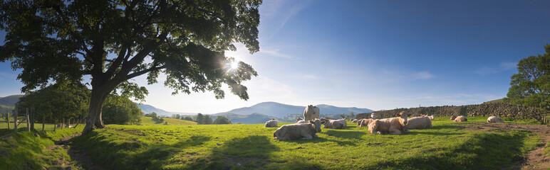 Idyllic rural, Lake District, UK