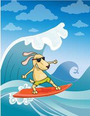 Surfing Dog, vector illustration