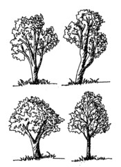 Hand drawn sketch trees with leaves illustration design