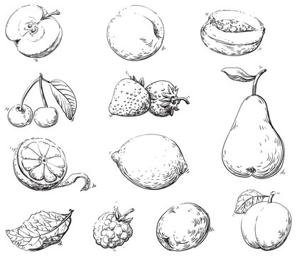 Vector set of fruits at engraving style