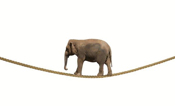 Elephant on a rope