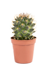 close up of small cactus houseplant in pot on white background