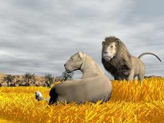 Couple of lions in the savannah - 3D render
