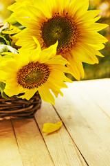 beautiful yellow sunflowers on wooden background