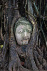 Buda en el arbol Tailandia