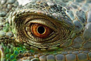 green iguana eye Wall mural