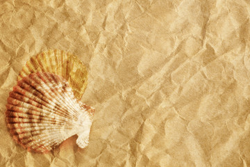 Vintage seashells presented on a sheet of textured paper